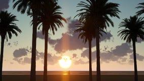 Palme nel tramonto illustrazione vettoriale