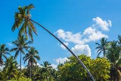 Palme nella giungla e nella spiaggia fotografia stock