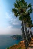 Palme nella spiaggia vicino alla spiaggia di Nai Harn Fotografia Stock