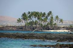 Palme-Oase Hawaiis tropische Stockfoto
