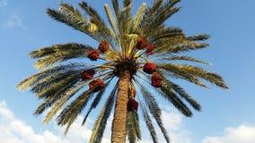 Palme-/palme Stockbild