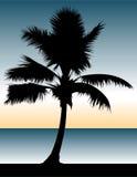 Palme-Paradies Stockfoto
