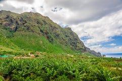 Palme piantagione, Tenerife, isole Canarie della banana Fotografie Stock Libere da Diritti