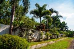 Palme piantate lungo la parete bianca Fotografia Stock