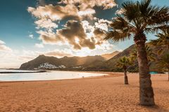 Palme Playa de las Teresitas Beach, Tenerife Immagine Stock Libera da Diritti