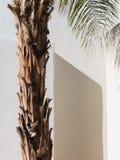 Palme, südwestliche Architektur Stockbilder