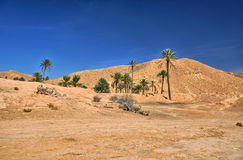 Palme in Sahara Desert, Tunisia, Africa, HDR Immagine Stock Libera da Diritti