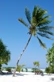Palme in Sansibar Lizenzfreie Stockfotos