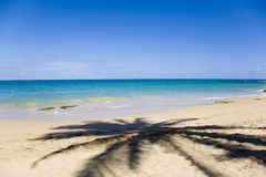 Palme-Schatten über dem Sand Stockbild