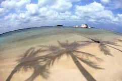 Palme-Schatten Stockfoto