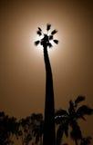 Palme-Schattenbild Stockfotografie