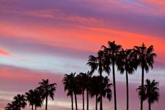 Palme-Schattenbilder auf Sonnenuntergang-Himmel-Hintergrund Lizenzfreies Stockfoto