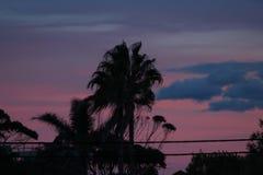Palme silhoutte bei Sonnenuntergang Stockfotos