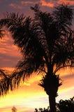 Palme-Sonnenuntergangschattenbild Lizenzfreie Stockfotografie