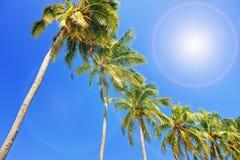 Palme sotto cielo blu immagine stock libera da diritti