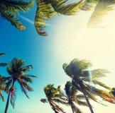 Palme sotto un sole brillante in Key West fotografia stock libera da diritti