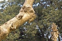 Palme squirrell Stockfotos