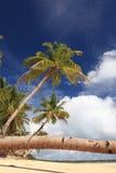 Palme-Stammdetail über tropischen Strand Lizenzfreie Stockfotografie