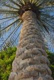 Palme-Stammnahaufnahme Saftiges Grün stockfotos