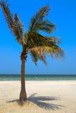 Palme am Strand Lizenzfreies Stockfoto