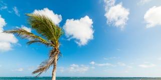 Palme in Strand Autre Bord in Guadeloupe stockfotografie