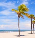 Palme su un bello pomeriggio soleggiato di estate Fotografie Stock