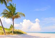 Palme su un bello pomeriggio soleggiato di estate Fotografia Stock Libera da Diritti