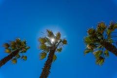 Palme su un cielo blu e su un fondo delle nuvole di bianco, Immagine Stock