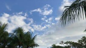 Palme su un fondo del cielo Condurre motorino Catturato dalla motocicletta con stadycam l'asia video d archivio