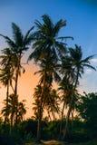 Palme su un fondo di cielo blu con luce solare Immagine Stock Libera da Diritti