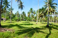 Palme su un'isola Fotografia Stock Libera da Diritti
