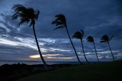 Palme su una riva di grande isola, Hawai al tramonto immagine stock libera da diritti