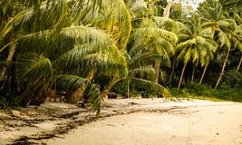 Palme su una spiaggia immagine stock