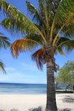 Palme su una spiaggia Fotografie Stock Libere da Diritti