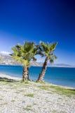 Palme su una spiaggia in Almunecar, regione dell'Andalusia Immagini Stock