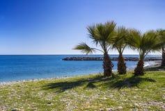 Palme su una spiaggia in Almunecar, regione dell'Andalusia, del della Costa Fotografia Stock Libera da Diritti