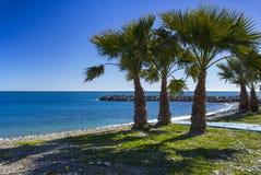 Palme su una spiaggia in Almunecar, regione dell'Andalusia, del della Costa Fotografia Stock