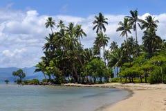 Palme su una spiaggia, isola di Vanua Levu, Figi Immagini Stock Libere da Diritti