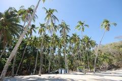 Palme su una spiaggia nel Panama immagini stock