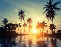 Palme su una spiaggia tropicale durante il tramonto stupefacente nave Immagine Stock