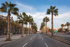 Palme sul bordo della strada, Barcellona Fotografia Stock
