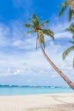 Palme sul fondo tropicale del mare e della spiaggia, vacanze estive Immagini Stock