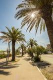 Palme sul percorso davanti al mare dell'Italia Fotografie Stock