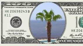 Palme sul vento nel telaio della banconota in dollari 100 stock footage