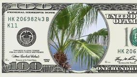 Palme sul vento nel telaio della banconota in dollari 100 video d archivio