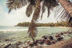 Palme sulla bella spiaggia nel clima tropicale Oceano e boschetto di legno su paesaggio a tempo soleggiato Fotografia Stock