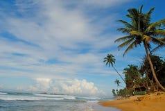 Palme sulla costa Fotografie Stock Libere da Diritti