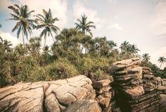 Palme sulla linea costiera Bello paesaggio nel clima tropicale Boschetto di legno a tempo soleggiato nello Sri Lanka Immagini Stock