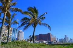 Palme sulla parte anteriore di mare di Durban, Sudafrica Immagini Stock Libere da Diritti