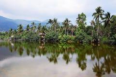 Palme sulla riva di un golfo tropicale Fotografie Stock Libere da Diritti